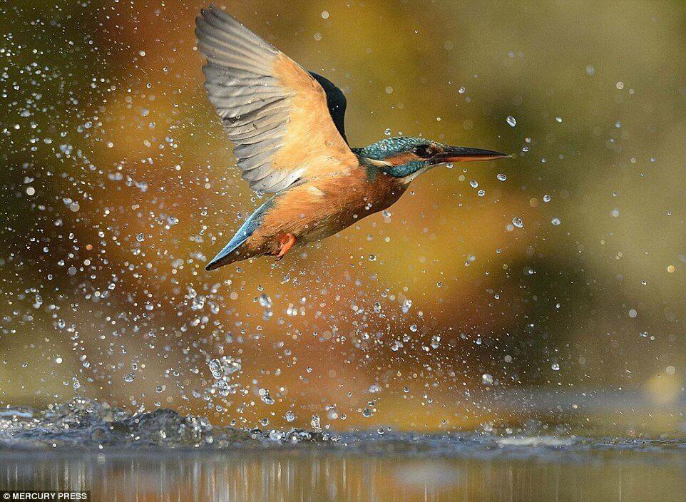 Hình ảnh chim bói cá ở Việt Nam