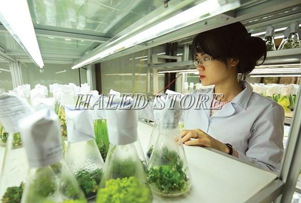 Ứng dụng của đèn phòng sạch trong nuôi cấy giống cây