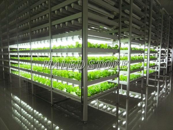 Ứng dụng đèn LED trong nông nghiệp