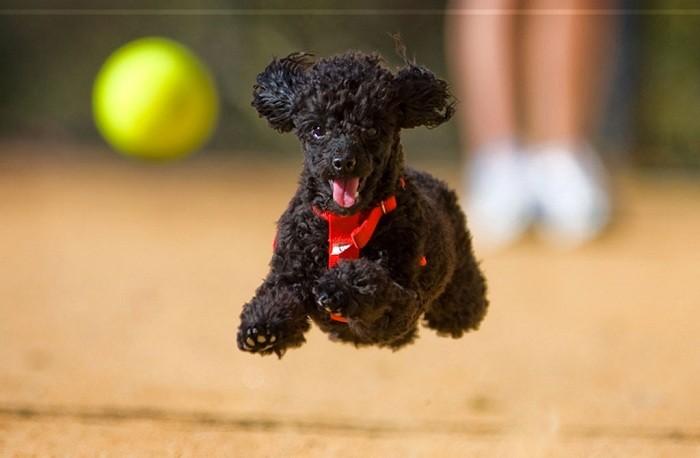 Cho chó ra ngoài chơi tự do