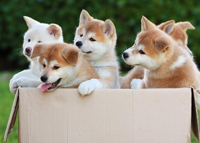 Cách chọn chó khôn theo dân gian