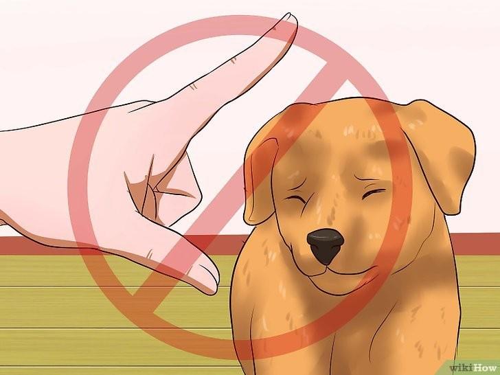 Không quát mắng khi chó làm sai