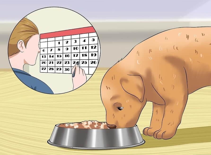 Xây dựng lịch trình thời gian huấn luyện (phụ thuộc vào thời gian ăn uống)
