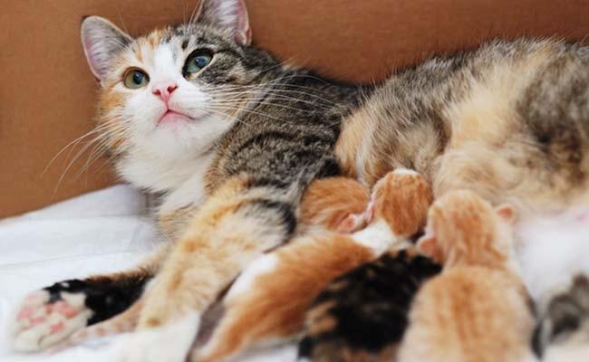 Sữa mẹ là thức ăn tốt nhất cho mèo con