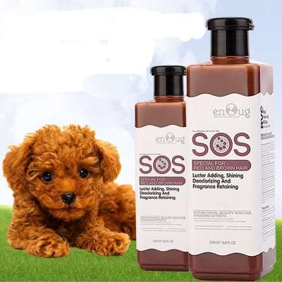 Chó con bao nhiêu ngày thì tắm được và lưu ý cách tắm cho chó