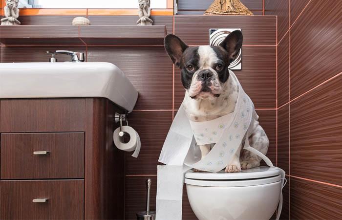 Đưa chó đi vệ sinh đúng chỗ