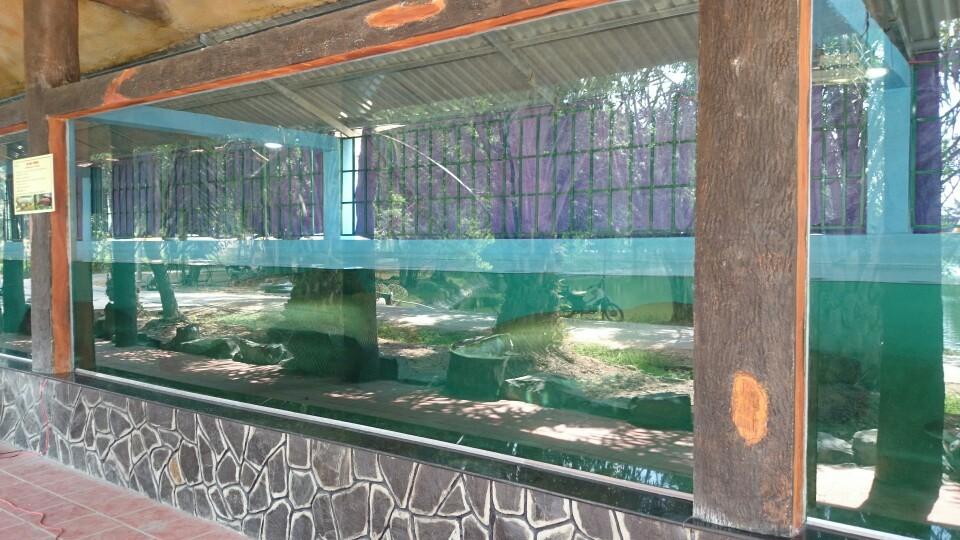 Bể cá hải tượng phải có kích thước lớn
