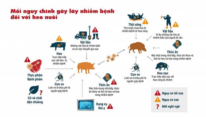 Dịch tả lợn Châu Phi có thể bị lây nhiễm qua nhiều đường khác nhau