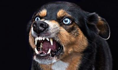 Tổng quan về bệnh dại ở chó mèo (Rabies)