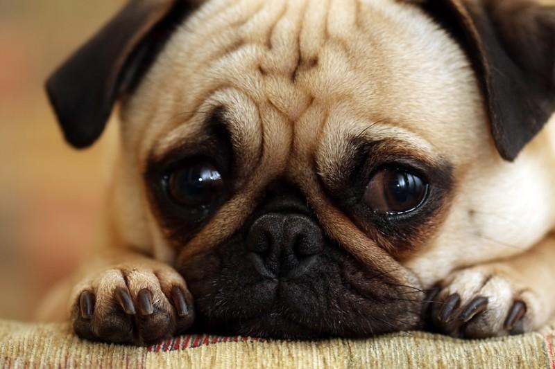 Có thể bổ sung thêmthức ăn khô cho chó con 1 tháng tuổi