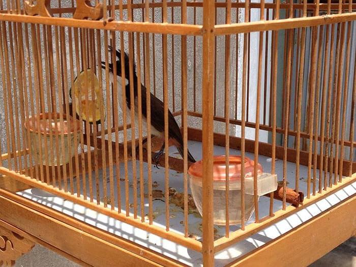 Chân chim bám được 3/4 cầu