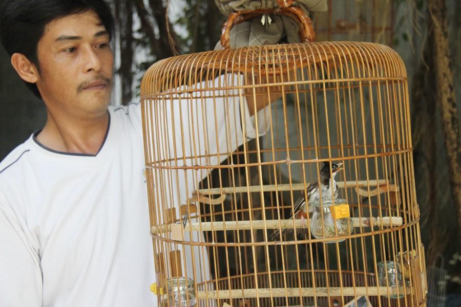 Cầu ngang được nhiều người nuôi chim lựa chọn