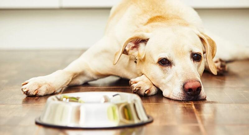 điều trị chó bị bệnh đường ruột hiệu quả
