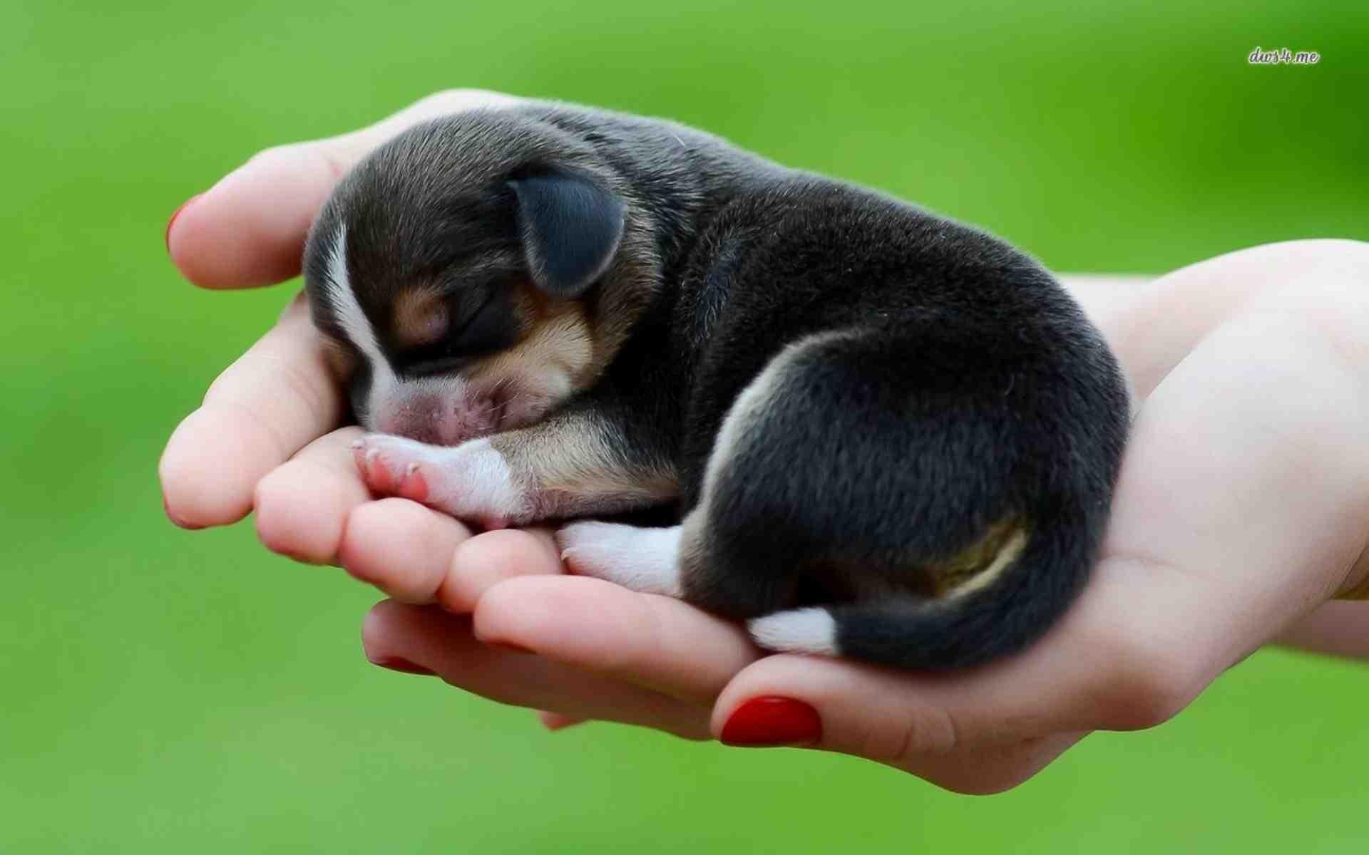 Chó đẻ một con là điều may mắn