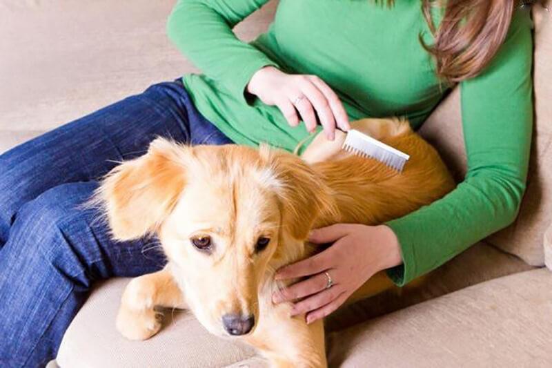Chăm sóc cún cưng trong quá trình mang thai