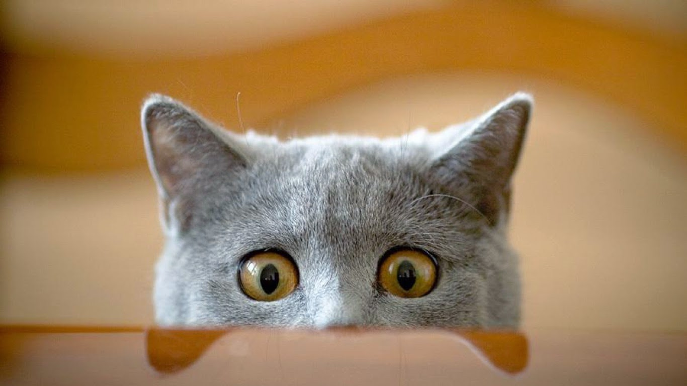 Mèo mẹ lo lắng, bồn chồn