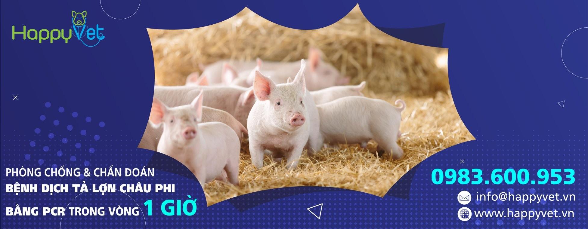 Phòng chống và chẩn đoán bệnh dịch tả lợn châu phi bằng PCR trong vòng 1 giờ