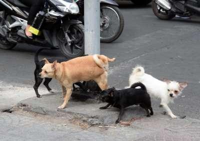 Tham khảo các loại thuốc xua đuổi chó mèo chống phóng uế bừa bãi