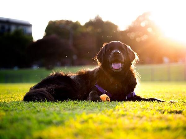 Cho chó tắm nắng sớm phòng chống bệnh co giật do thiếu canxi ở chó mèo