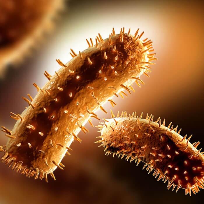 Virus dại gây bệnh dại ở chó mèo