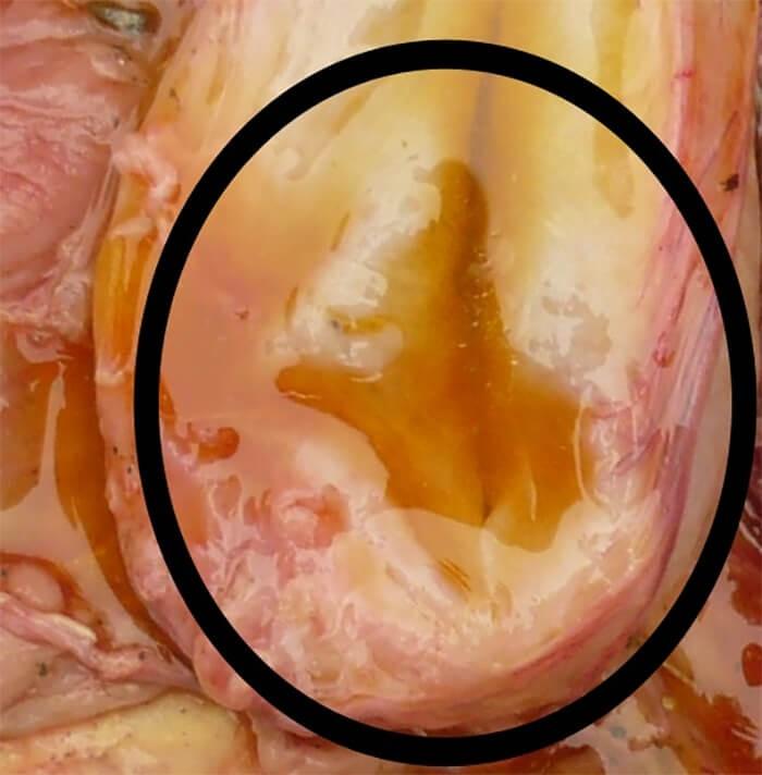 Nước tiểu có màu vàng có mùi khét khi bị bệnh lepto ở chó
