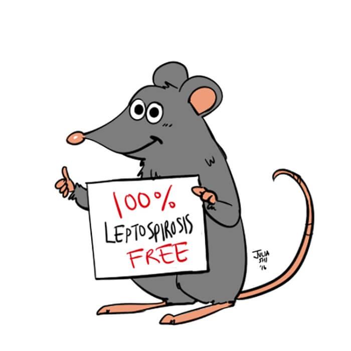 Chuột mang và đào thải bệnhleptospirasuốt đời
