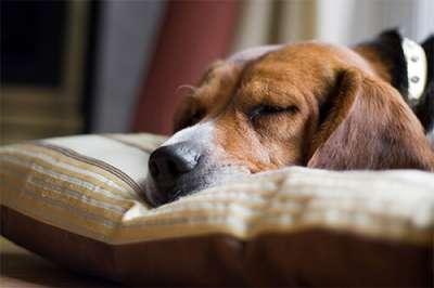 Cách điều trị và phòng ngừa bệnh lỵ do Amip ở chó mèo (Amebiosis)