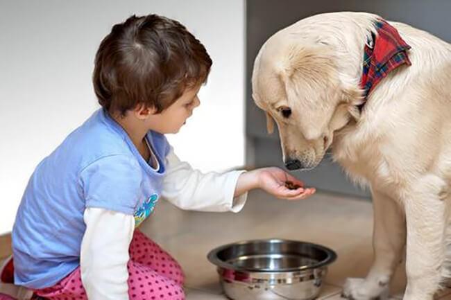 phòng các bệnh thường gặp ở chó