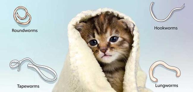 phòng bệnh thường gặp ở mèo