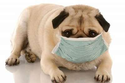 Phương pháp điều trị bệnh viêm phế quản ở chó mèo đúng cách