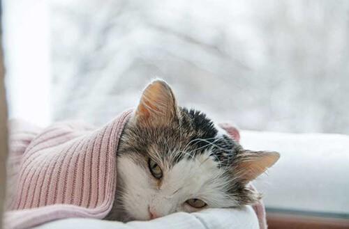 Nơi ở của mèo được giữ ấm để phòng ngừa bệnh viêm phế quản ở mèo