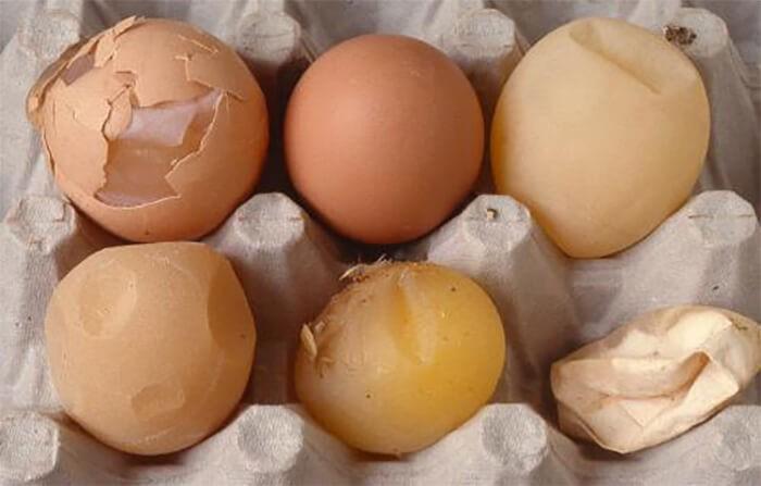 Triệu chứng bệnh IB trên gàtrứng vỏ mỏng dễ vỡ