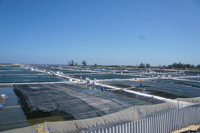 Farm tôm công ty cổ phần QNTEK