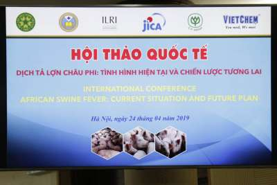 Dịch tả lợn châu phi: Tình hình hiện tại và chiến lược tương lai