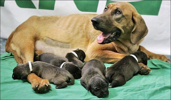 Chó nuôi bao lâu thì đẻ