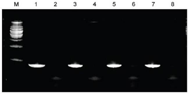 hoạt động của hệ thống tách chiết DNA tổng số taco™ 24 mẫu,