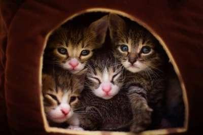 Hướng dẫn cách nuôi mèo con hoang mới sinh