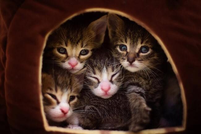 cách nuôi mèo con mới sinh