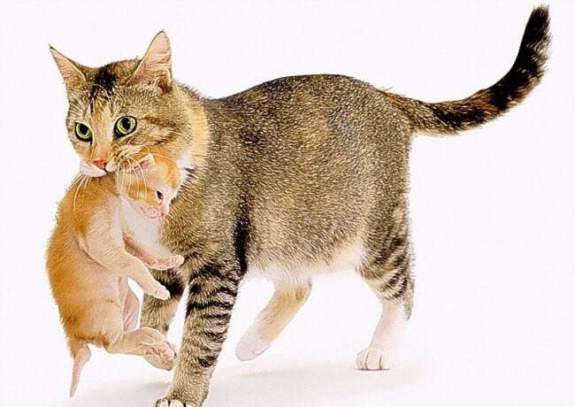 cách nuôi mèo con mất mẹ
