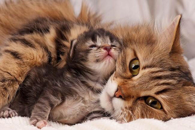 cách nuôi mèo con mới đẻ