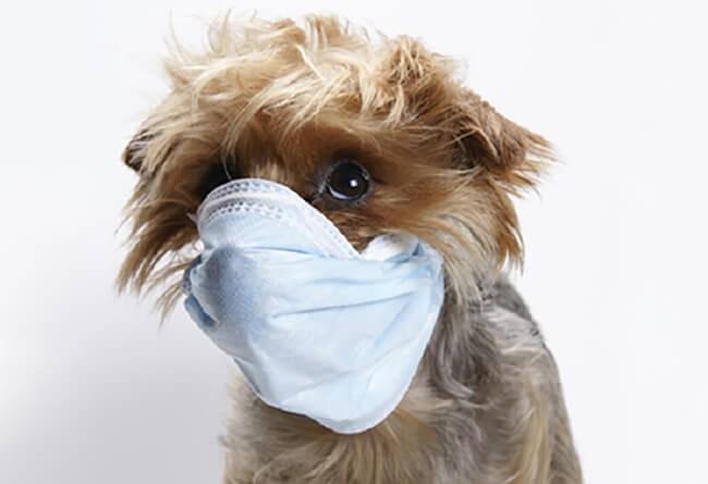 Chó nôn khan, tiêu chảy, bỏ ăn có thể là do bị nhiễm bệnh