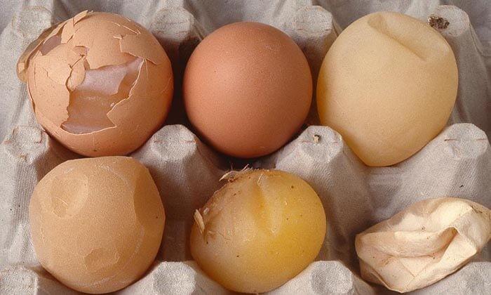 Biểu hiện của Hội chứng giảm đẻ ở gà