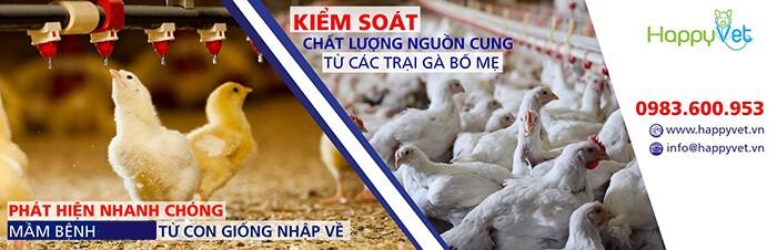 phòng bệnh hội chứng giảm đẻ ở gà