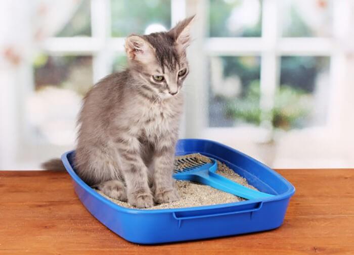 Đặt khay vệ sinh ở nơi cố định cách dạy mèo đi vệ sinh đúng chỗ