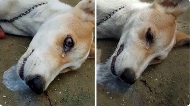 Hiện tượng chó bị co giật sùi bọt mép