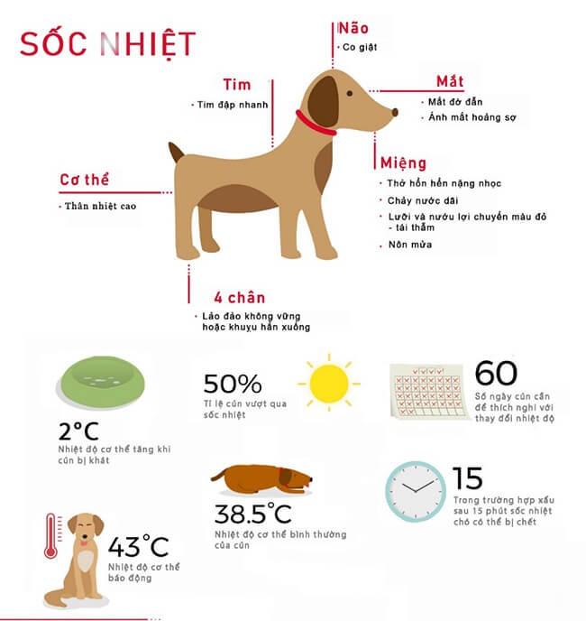 Những điều cần biết khi nuôi chó khi chó bị sốt