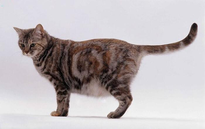 Mèo chửa mấy tháng là đẻ?