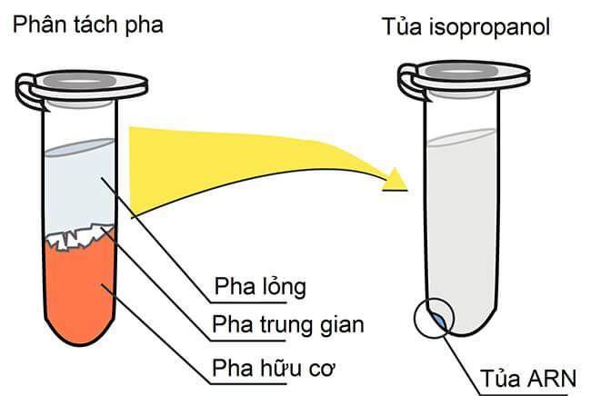 quy trình tách chiết RNA tổng số