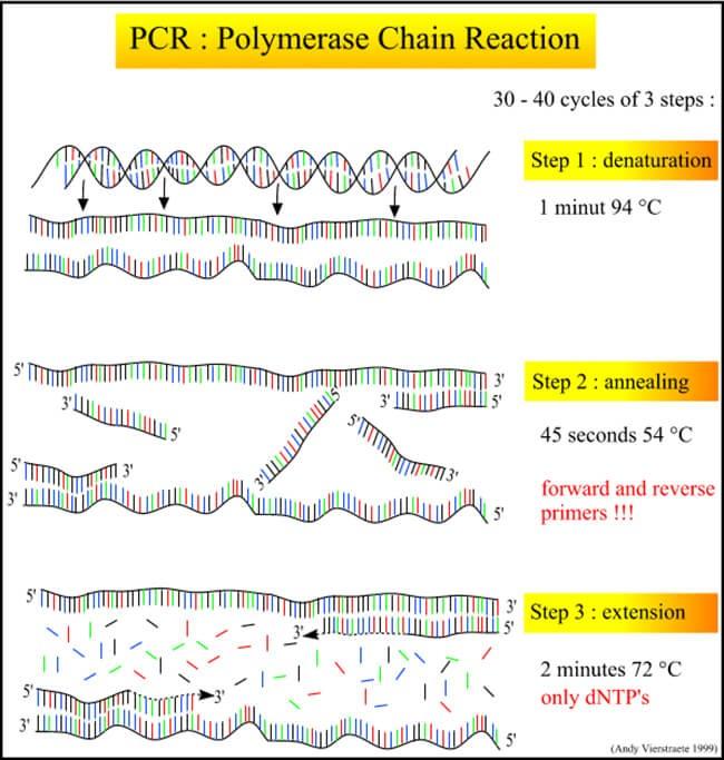 Nguyên lý phản ứng máy PCR