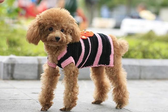 phòng ngừa chó bị cảm lạnh